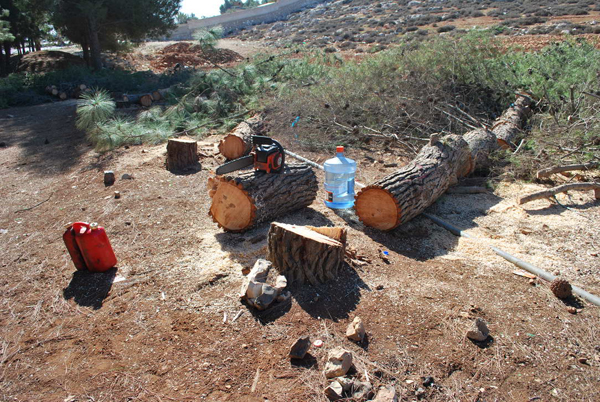 effects of illegal logging The harvesting procedure itself may be illegal, including using corrupt means to gain access to forests extraction without permission or from a.