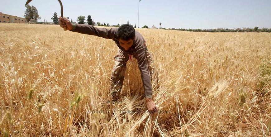 Gov't buying wheat, barley at preferential prices from local